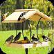 DIY Bird House Ideas by Robert Sandoval