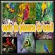 canto de pássaros do brasil
