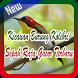 Kicauan Burung Kolibri Sepah Raja Gacor Terbaru