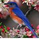 Cute Birds Puzzle Game by J Su Dev