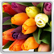 Colorful Tulips Live Wallpaper by HQ Awesome Live Wallpaper