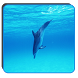 Ocean Dolphin Keyboard Theme by beautifulwallpaper