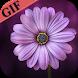 200+ Flower GIF (HD)