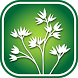1100 Manitoba Wildflowers by Flora ID Northwest, LLC