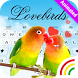Animated Love Birds Keyboard Theme by Keyboard Arts Themes