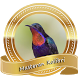 Masteran Burung Kolibri