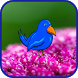 Blue Bird Journey In Flowers by Droid Casual