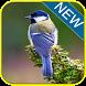 Kicau Burung Gelatik Batu by gemilang developer