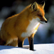 Fox Puzzles Jigsaw by borzoapps