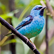 South American Birds Sounds by luminous apps