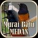 Master Burung Murai Batu Medan by JTZstudio