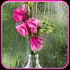 Rose Live Wallpaper by Mobile Masti Zone