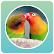 Master Kicau Burung 2017 by desdev