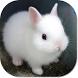 Cute Bunny HD Wallpapers by HD Wallpaper Developers