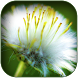 White Flower Wallpaper by Images Menia