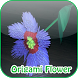 Origami Flowers Instruction by LightspeedApps