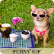 Funny Animal Gif by Varniappstore
