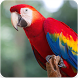 Parrot Bird Sound : Parrot Bird Singing