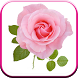 New Beautiful HD Roses Wallpapers by Creative Flow LTD