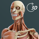 Visual Anatomy 3D | Human by GraphicViZion