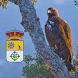 San Vicente Fauna y Flora