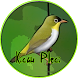 Kicau Burung Pleci 2017 by dualapan corp