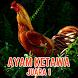 Master Suara Ayam Ketawa Juara by Sekarung Barokah Studio