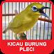 Kicau Burung Pleci Mania by esstudiodev
