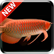 New Arowana 3D Live Wallpaper by kimvan
