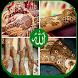 Eid Mehndi Designs by LifeStyle Apps