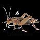 Sound Of Crickets Joke by Ngabase
