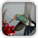 Humming Birds in Water by Artiz Inc.