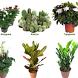 Комнатные растения каталог by Михаил Ханцевич