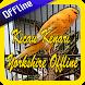 Kicau Kenari Yorkshire Offline by ayuki apps