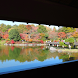 Momiji of Showa Memorial Park by takemovies