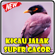 Kicau Jalak Super Gacor by Kicau Burung Dev