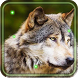 Wolves Gallery live wallpaper by Live Wallpaper Exellent