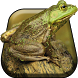 Silly Frog Live Wallpaper by Wallpaper Star Design