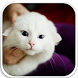 Cute Kitty HD wallpapers. by Vanquish Apps