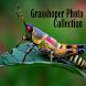Grasshoper Photo Collection
