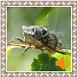 Cicada Sounds by Godev Houz