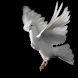 White pigeon live wallpaper
