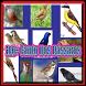 1001+ Cantos De Pássaros by Rejeki 7 Turunan