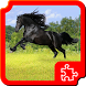 Beautiful Horses Puzzles by Dimax Puzzles
