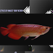 Arowana Fish by style design
