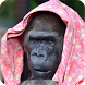 Gorilla Image Collection by Tecco's Project