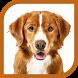Learn Animal Names by Aarya Infotech