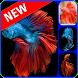 Betta Fish Wallpaper by Karya Bintara apps
