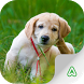 Dogs Guide by Agrimind