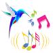 Webradio Luz do Ser by LiveCast HD